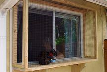 Kediler için pencere
