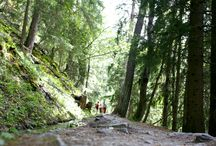Hiking / There are lots of alpine trail walks to discover in Val d'Anniviers!