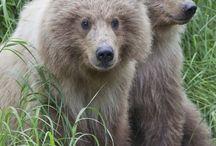 Bears! / by Victoria Davis