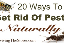 Get rid peast naturally
