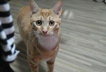 Nekko / lovely my cat name is Nekko
