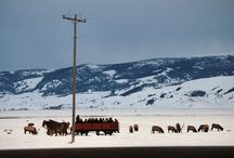Teton Winters / From cross country skiing to sleigh rides on the National Elk Refuge, there's something for everyone during winter in the Tetons!