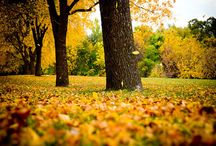 Autumn Gold / by Christine Kysely