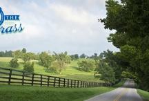 Run the Bluegrass