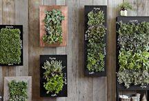 drewno + rośliny