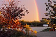 Rainbows / Rainbow Pictures