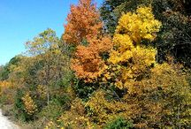 Iowa's Fall Colors