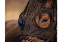 The Equilume Light Mask / The revolutionary light therapy mask that's taking the equine reproduction industry by storm!