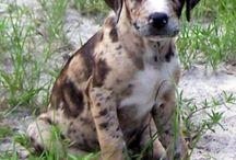 New puppy 2014