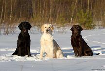 Favorite dogs / by Lisa McCracken Byler