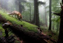 Creatures of the forest / For inspiration <3