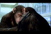 GRATUIT ~ Regarder ou Télécharger La Planète des singes Streaming Film COMPLET