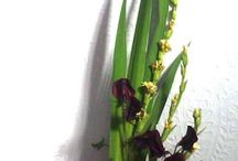 Modern Contemporary Floral Designs / Ikebana style - perfect for offices, hotels and modern living styles