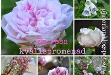 Blommor & trädgård