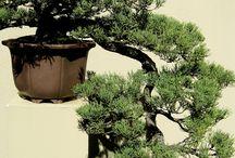 drzewa egzotyczne / drzewa z różnych stron świata