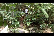 KL Weekend Getaways / Get out of the capital city and into the spirit of the rainforest with these special jungle and outdoor getaways that refresh your mind and body before going back to work.