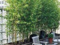 Helenas trädgård