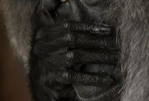 Animals photo :)