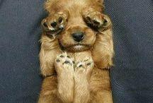 Damn Cute Dogs