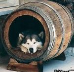 Hondenhok