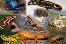 What are Amphibians? / The Species of the World in Images