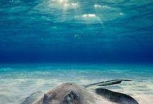 sous la mer un monde