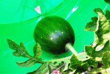 Home - Plants/Garden - Edibles