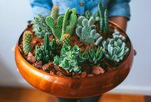 Plantas & Cactos