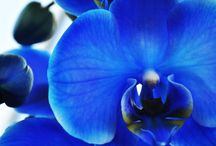 Ornemantal Plant - Süs Bitkileri - Flower -Plant