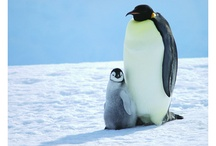 Exhibit: Lessons From Penguins / Photos, crafts and inspiration from our upcoming 2015 exhibit, Lessons from Penguins