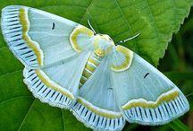Vlinders rupsen en libellen