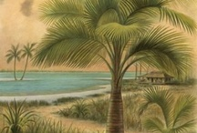 Palm Tree Decor / by Vicki Appello