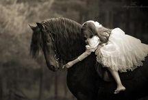 Pferde / Kraft, Energie und Eleganz in einem