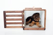 pup. / by Robin McMillan
