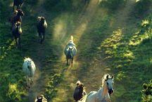 mustang yani atlar sırtında geldik