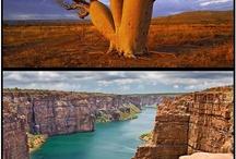 Árvores e paisagens incomuns