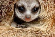 Meerkat cuteness