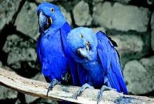 Bird Articles