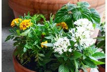 florals / by Heather Weinstein