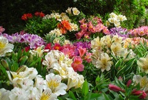 Grow Your Own Flower Arrangements / DIY Flower Arrangements are BEST When Your Grow the Flowers Yourself!  :)  This is a collection of flowers that are easy to grow in YOUR garden that make terrific cut flowers.  Enjoy!