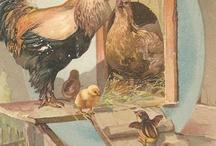 cosiaczki jajcaczki