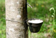 A Borracha na Amazônia