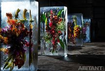 Красивейшие цветы во льду