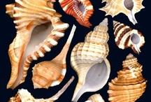 Swanky Shells