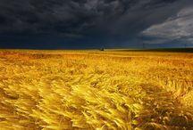 Weather / by Peg Schoenfelder