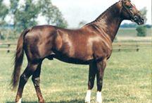 Horse - Верховые и военные породы