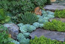 New desert garden ideas