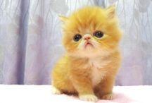 Hello Kitty! :)