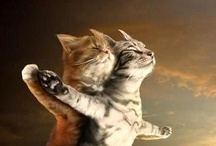 Crazy about cats and kittens / by Laura Orlando