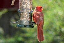 Ornithology / by Joanna D